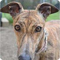 Adopt A Pet :: Riva (FTK Pile Driver) - Chagrin Falls, OH