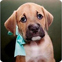 Adopt A Pet :: Moss - Rochester, NY