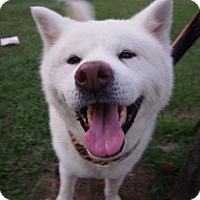 Adopt A Pet :: Choco - Sunnyvale, CA