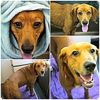 Adopt A Pet :: Sylvia - Forked River, NJ