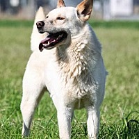 Adopt A Pet :: Spooky - Hooksett, NH