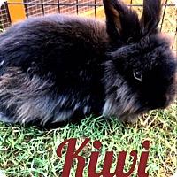 Adopt A Pet :: Kiwi - Paramount, CA