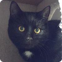 Adopt A Pet :: Summer - Colmar, PA