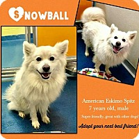 Adopt A Pet :: Snowball - Ponca City, OK