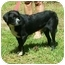 Photo 2 - Spaniel (Unknown Type) Mix Dog for adoption in Little River, South Carolina - Scout
