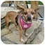 Photo 1 - Chihuahua Dog for adoption in El Segundo, California - Willow