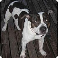 Adopt A Pet :: Apollo - Fort Lauderdale, FL