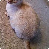 Adopt A Pet :: ChiChi & Darcy - Arlington, VA