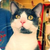 Adopt A Pet :: Orv - Green Bay, WI