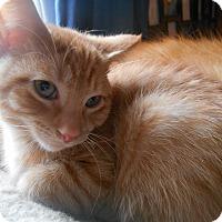 Adopt A Pet :: Ralph - Richland, MI