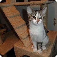 Adopt A Pet :: Zoya - Milwaukee, WI