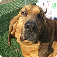 Adopt A Pet :: Ellie Mae - Harrisburgh, PA