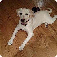 Adopt A Pet :: Sage - Salem, OR