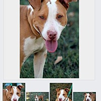 Adopt A Pet :: Melanie - Cookeville, TN