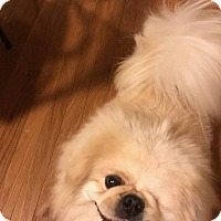 Adopt A Pet :: Patchy - Portland, ME