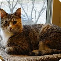 Adopt A Pet :: Chloe - Cleveland, OH