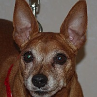 Adopt A Pet :: Rex - Longview, WA