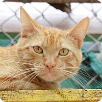 Adopt A Pet :: Micah - Vancouver, WA