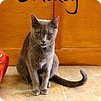 Adopt A Pet :: Smokey - Mobile, AL