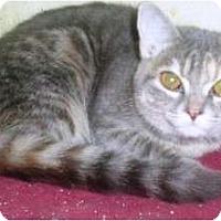 Adopt A Pet :: Jacqueline - Summerville, SC