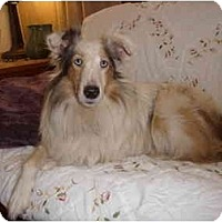 Adopt A Pet :: Keely - San Diego, CA