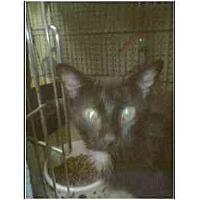 Adopt A Pet :: Jewelliana - Owasso, OK