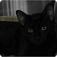 Adopt A Pet :: Sampson - Greenville, SC