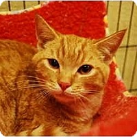 Adopt A Pet :: Colby - Modesto, CA