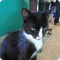 Adopt A Pet :: Jordan - Coos Bay, OR