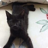 Adopt A Pet :: Clem - Acme, PA