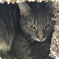 Adopt A Pet :: BamBam - Horsham, PA