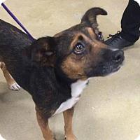Adopt A Pet :: Stella - Gainesville, FL