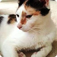 Adopt A Pet :: Candi - Orange, CA