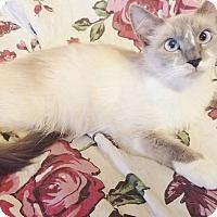 Adopt A Pet :: Jade - Cerritos, CA
