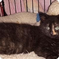 Adopt A Pet :: Tres - Kirkwood, DE
