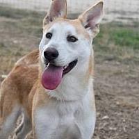 Adopt A Pet :: Cane - Clifton, TX