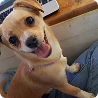 Adopt A Pet :: Nancy - Victorville, CA