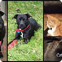 Adopt A Pet :: Faith - Beaumont, TX