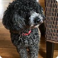 Adopt A Pet :: Dusty - Atlanta, GA