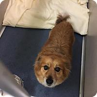 Adopt A Pet :: Coco - Jupiter, FL