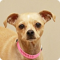Adopt A Pet :: MANIQUE - Las Vegas, NV