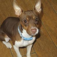 Adopt A Pet :: Lewis - San Antonio, TX