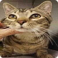 Adopt A Pet :: BALLY - Atlanta, GA