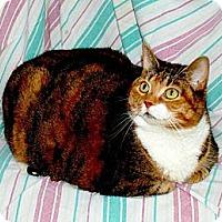 Adopt A Pet :: Nora - Sunderland, ON