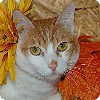 Adopt A Pet :: Fettachini - Flower Mound, TX