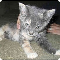 Adopt A Pet :: Sawyer - Davis, CA