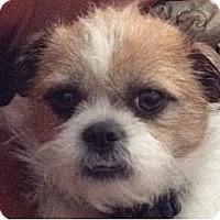 Adopt A Pet :: BELLA - Mission Viejo, CA