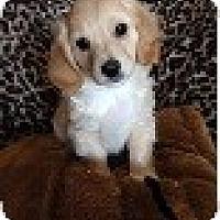 Adopt A Pet :: BAYLIE - Mission Viejo, CA