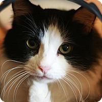 Adopt A Pet :: Maggie May 2 - Canoga Park, CA