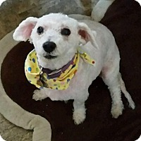Adopt A Pet :: STAR - East Hanover, NJ